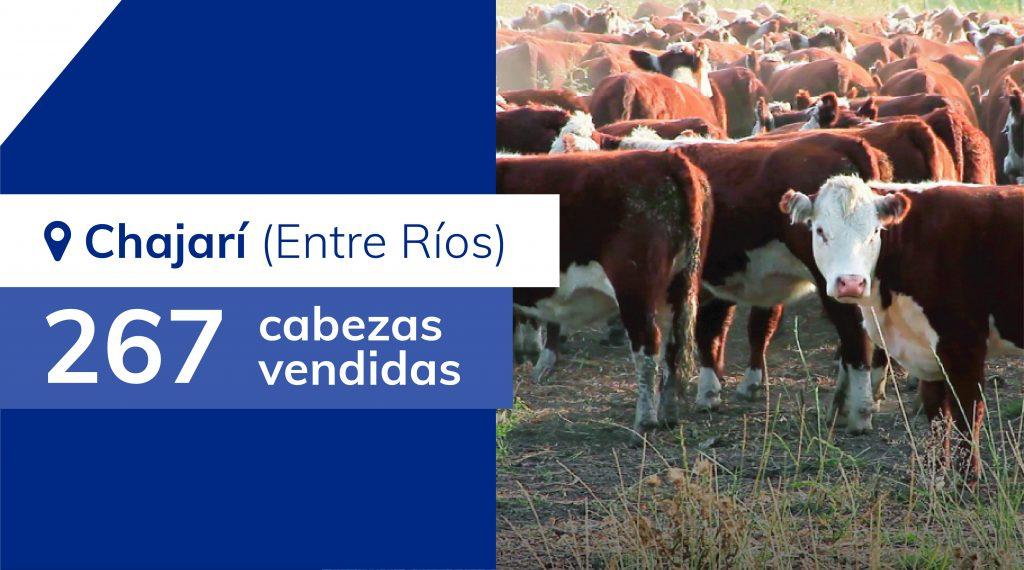 Resultados Chajarí (Entre Ríos) – 23/07/2019