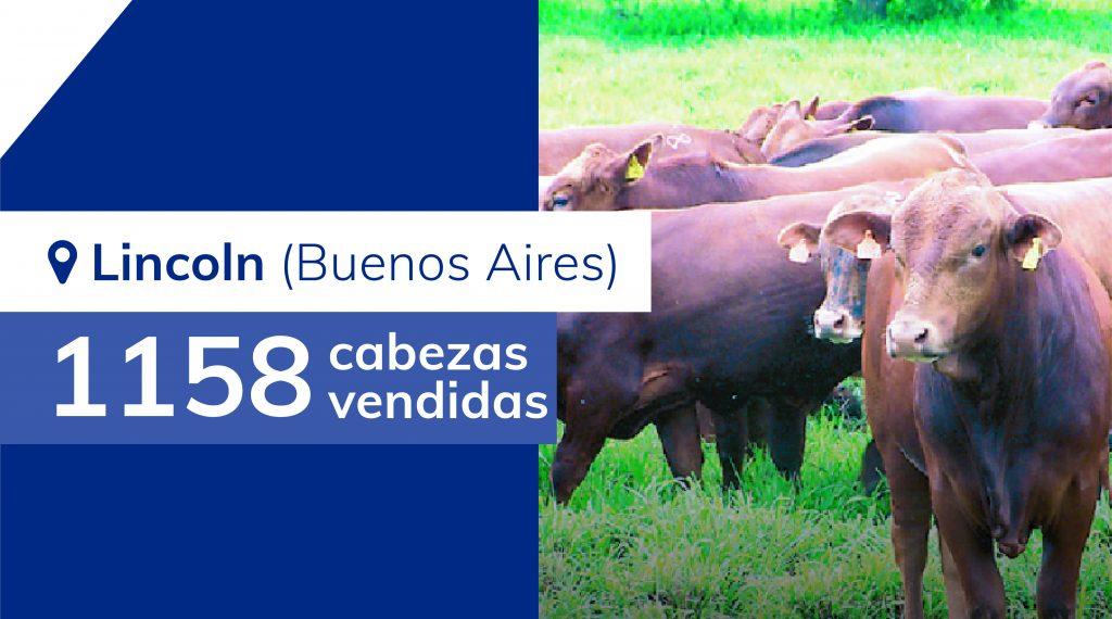 Resultados Lincoln (Buenos Aires) – 12/07/2019