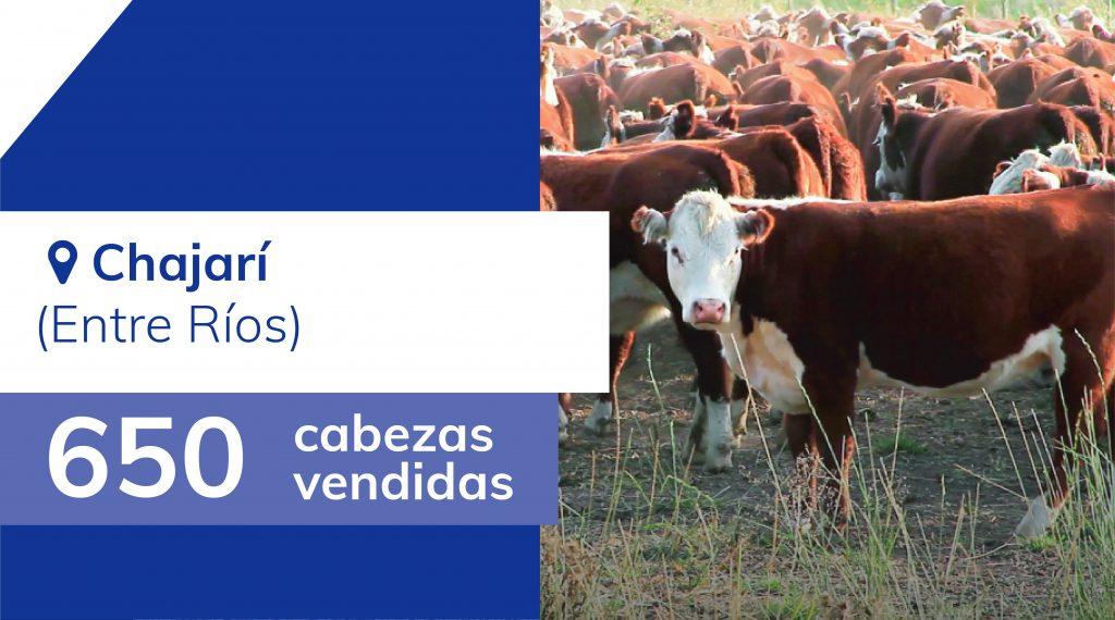 Resultados Chajarí (Entre Ríos) – 03/03/2020