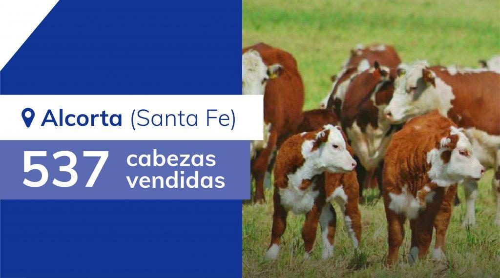 Resultados Alcorta (Santa Fe) – 23/04/2020