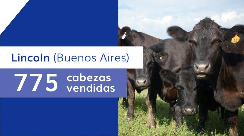 Resultados Lincoln (Buenos Aires) – 13/05/2020